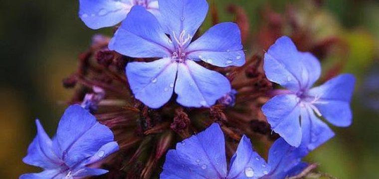Flores de Bach: Usos y propiedades